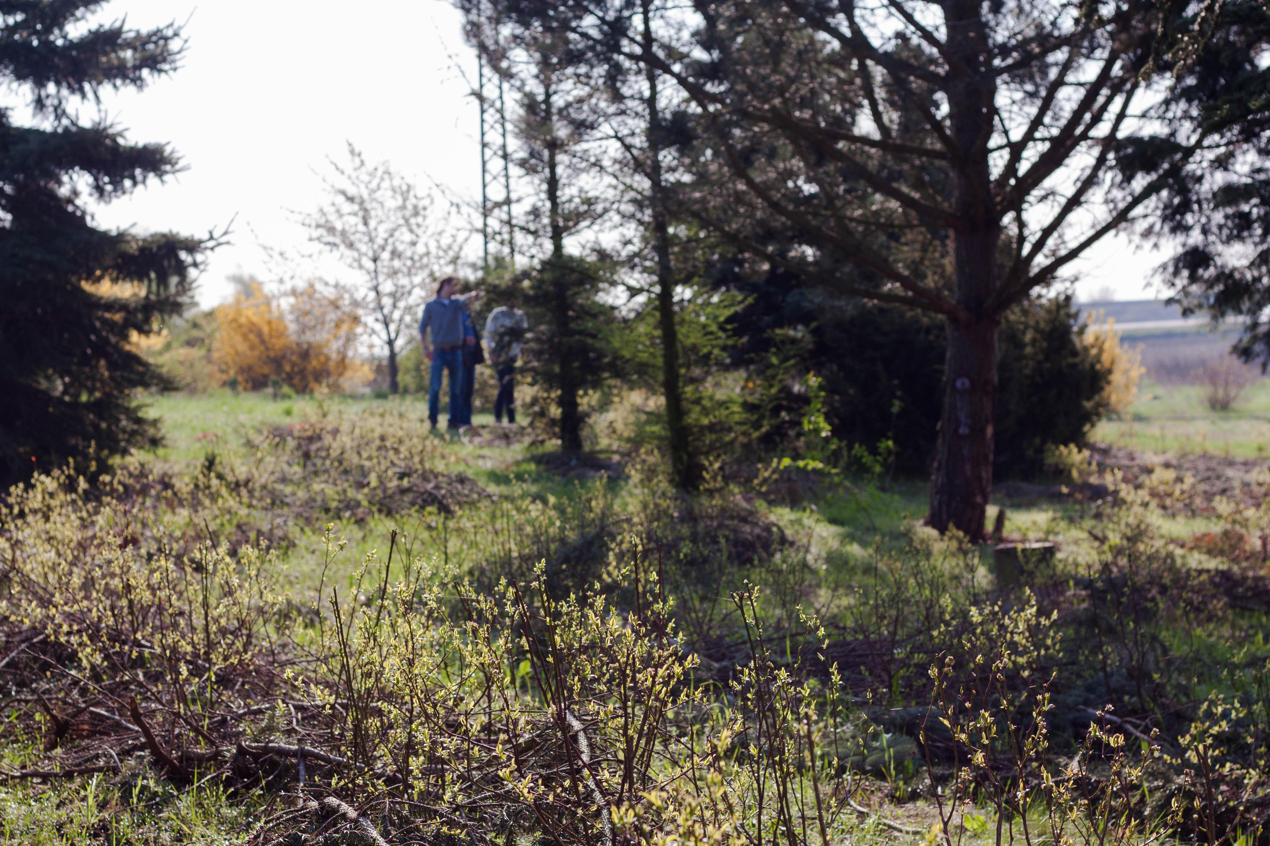 Nadelbaum und Beerensträucher